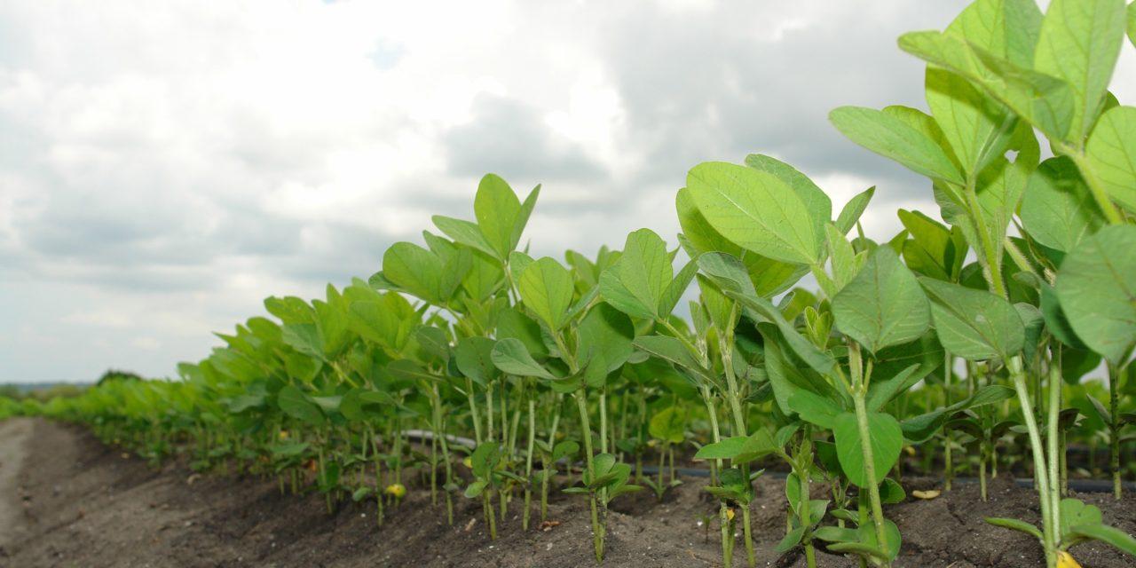 Brasilien: Erfolgreiche Sammelklage gegen Monsanto