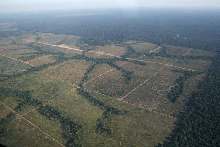 Stoppt das Amazonas-Kettensägenmassaker