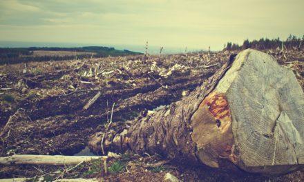 Rettet den Amazonas – Dringend!