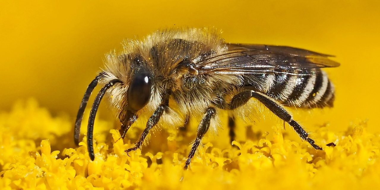 Skandal: Monsanto Buys Leading Bee Research Firm