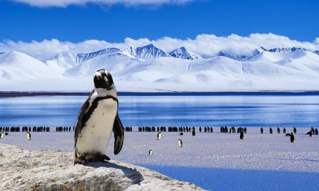 Arktisches Meereis auf niedrigstem Stand seit Beginn der Aufzeichnungen