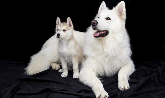 Haben kleine Hunde Angst vor großen Hunden?